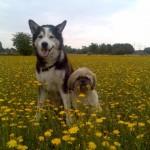handybilder-069-150x150 Schicken Sie uns Ihre schönsten Tierfotos