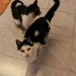 heimat-katzen-linda-arno-alt-vermitteln-wollaberg-150x150 Alte Katzen suchen Dosenöffner