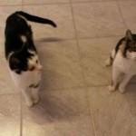 heimat-katzen-linda-arno-alt-wollaberg-150x150 Alte Katzen suchen Dosenöffner
