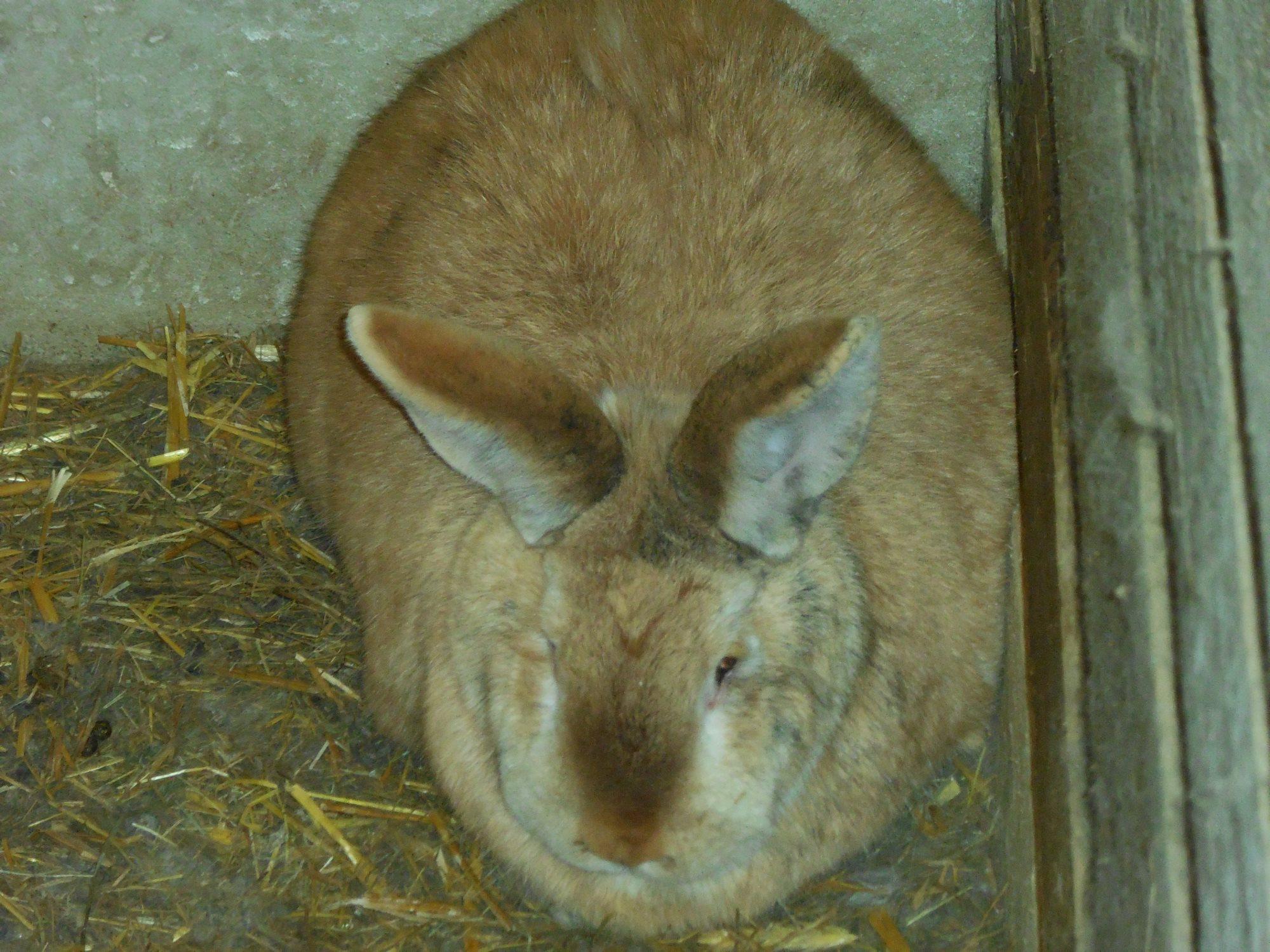 kaninchen-napf-stall-hoppel01 Hoppel wünscht sich zu Ostern...