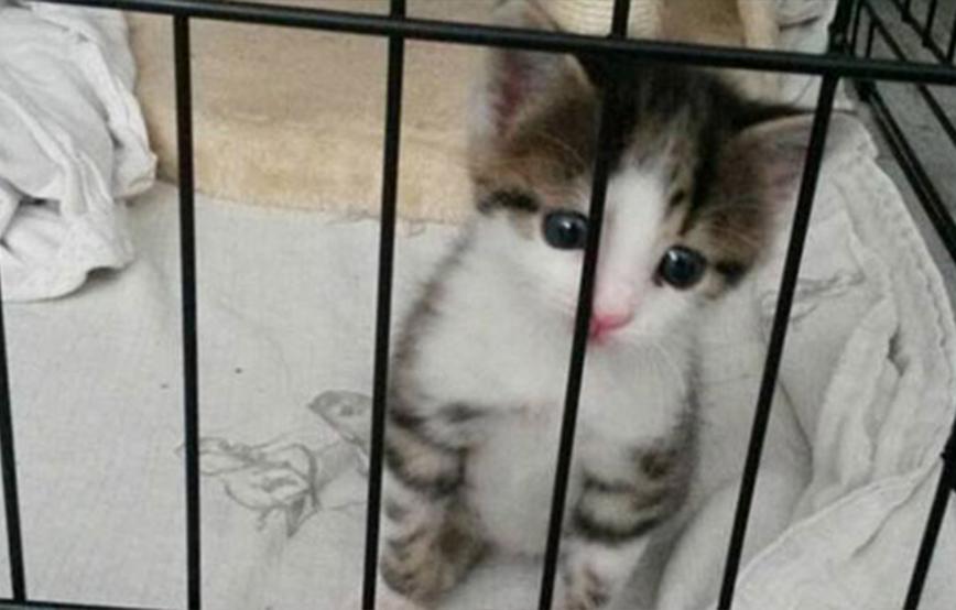 projekt-beitragsbild-katzenelend-neu Unterstützen Sie das Tierheim Wollaberg