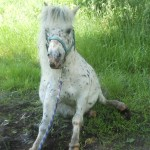 rscn2078-150x150 Schicken Sie uns Ihre schönsten Tierfotos