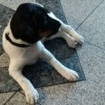 tierfotos-jack-russel-sam-teppich-150x150 Schicken Sie uns Ihre schönsten Tierfotos