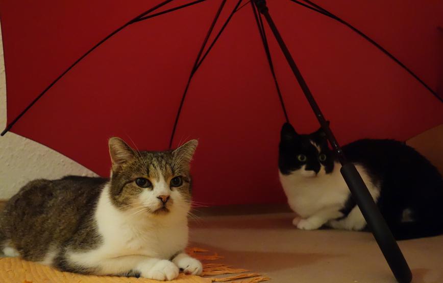 zwei-katzen-unterm-regenschirm Peppi und James - Zuhause, aber auf Abstand
