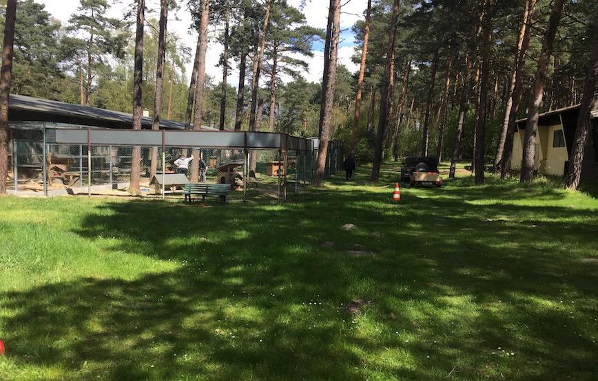 Frühjahrsputz-gehege-wiese-sonne Frühjahrsputz im Tierschutzliga-Dorf