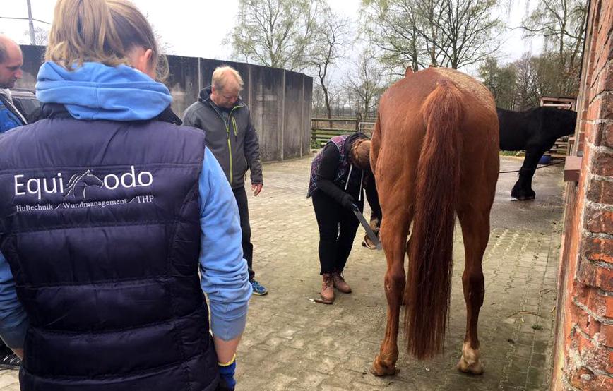 Hufkurs-Wardenburg-Equiodo-huftechnik-pferd Aktuelles - Tierschutzhof Wardenburg