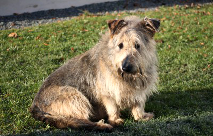 Hund-max-sitzt-auf-der-wiese Aktuelles - Tierheim Unterheinsdorf