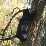 Katze-Angelo-klettert-auf-einem-baum-150x150 Angelo - der Platz, wo du einst warst, ist so leer
