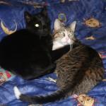 Katze-Angelo-kuschelt-mit-anderer-katze-150x150 Angelo - der Platz, wo du einst warst, ist so leer