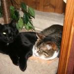 Katze-Angelo-liegt-neben-anderen-katze-150x150 Angelo - der Platz, wo du einst warst, ist so leer