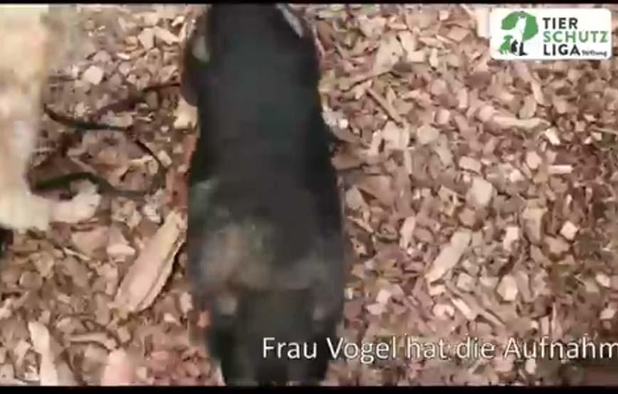 beitragsbild-aufnahmepatenschaft-5-hunde-tierschutzliga-dorf-retriver Aufnahmepatenschaft für Auslandshunde