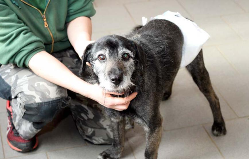 beitragsbild hund kurtchen windeln osterwunsch inkontinenz tierschutzliga dorf