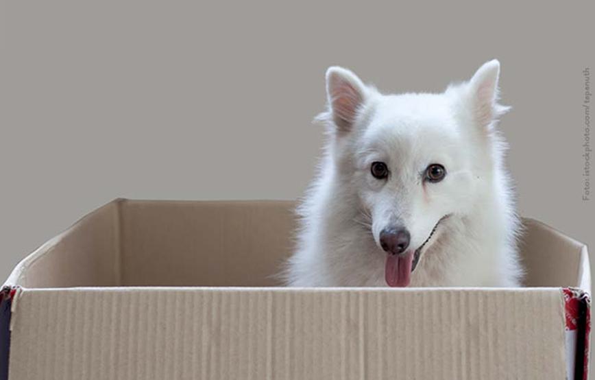 beitragsbild-hunde-karton Laufende Tierschutz-Projekte