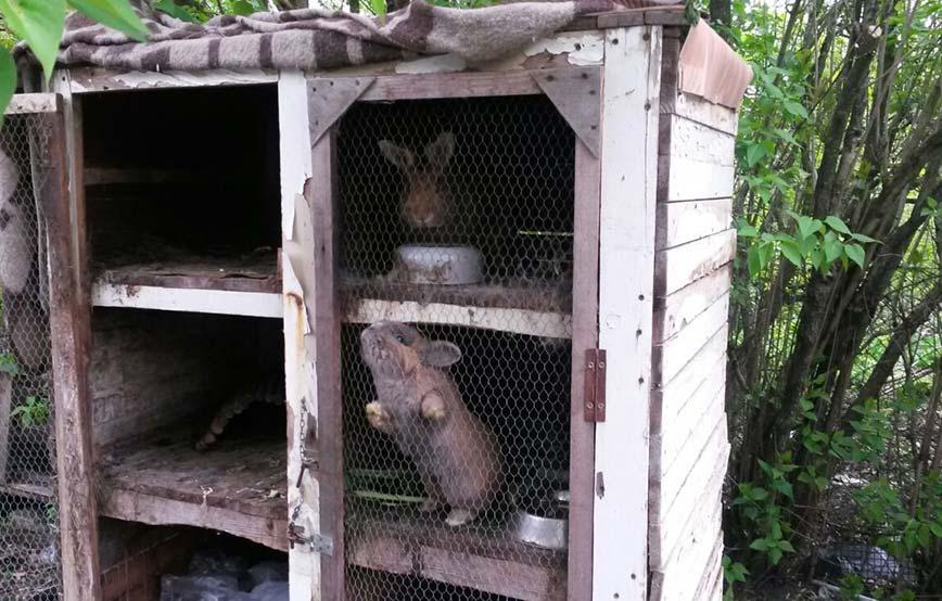 beitragsbild-kaninchen-käfig-verwarlost-tierschutzliga-dorf Tierschutzdetektive im Einsatz