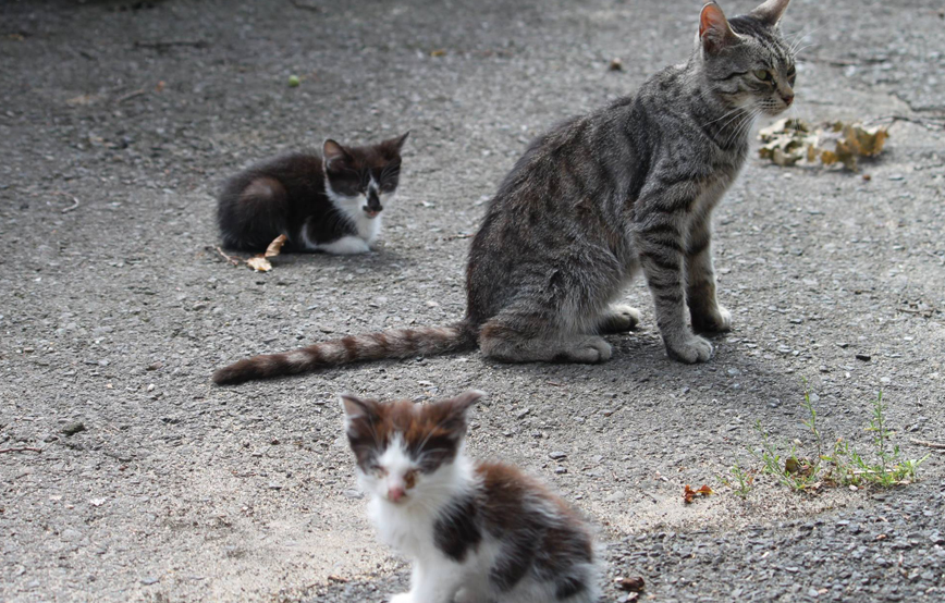 beitragsbild katzenfänger katzenelend tierschutzliga dorf