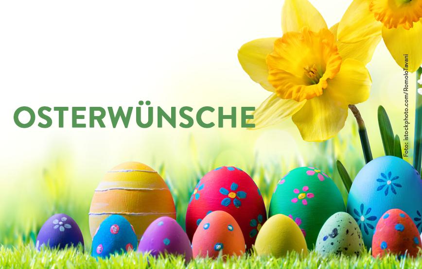 beitragsbild-osterwünsche-blumen-tierschutzliga Aktuelles - Tierschutzhof Wardenburg