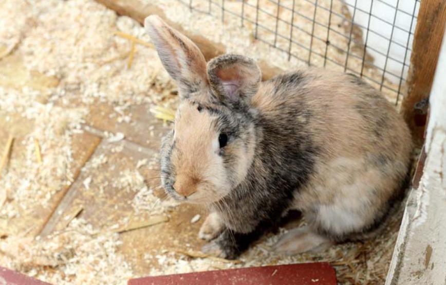 beitragsbildkaninchen-flecky-futter-tierschutzliga-dorf-bild Unterstützen Sie das Tierschutzliga-Dorf