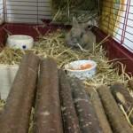 kaninchen-holz-verwarlost-tierschutzliga-dorf-150x150 Kaninchen ohne Namen