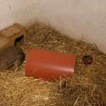 kaninchen-stroh-verwarlost-tierschutzliga-dorf-150x150 Kaninchen ohne Namen