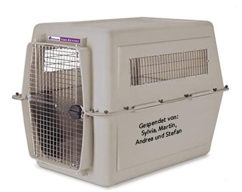 transportbox-gross-tierschutzliga-dorf Hunde im Karton – Hoffentlich kein Skandal