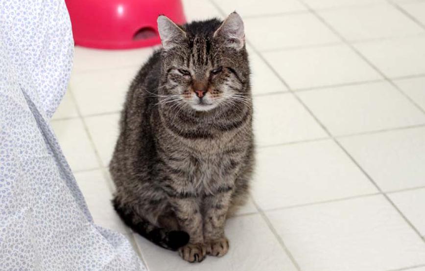 Katze-Ottfried-sitzt-auf-fliesenboden-trauriges Trauriges - Tierheim Wollaberg