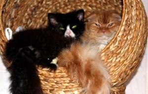 Katzen-Loki-und-Mr-Scrootch-kuscheln-300x191 Lockenköpfchen Loki und Scrootch