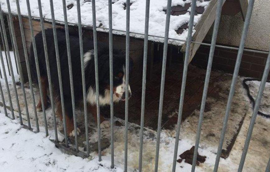 beitragsbild-hund-zwinger-alleine-gitter-kein-futter-wasser Tierschutzdetektive - Bei uns ums Eck