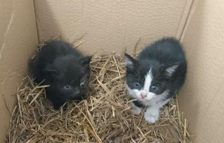 beitragsbild-katzen-ausgesetzt-karton Unterstützen Sie das Tierheim Wollaberg