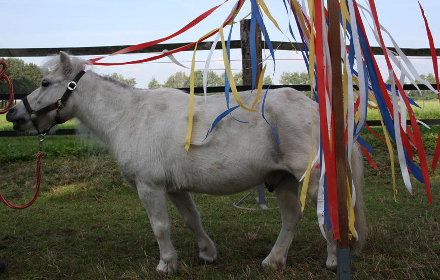 pferd-auf-wiese-erlebnisnachmittag Veranstaltungen - Tierschutzhof Wardenburg