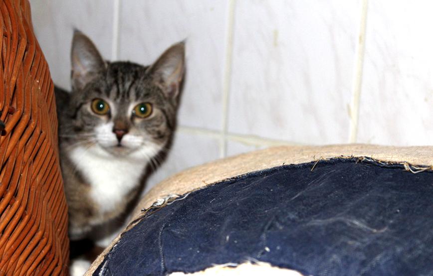 scheue-katze-elvira-versteckt-sich-hinterm-weidenkorb Glücklich vermittelt - Katzenstation München