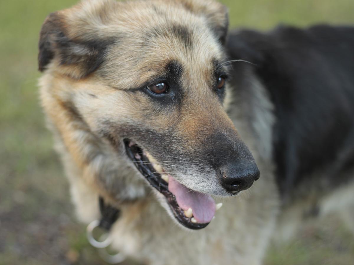 schwarz-brauner-hund-schaut-zur-seite Rest-des-Lebens-Patenschaft
