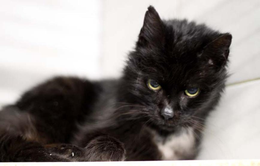 schwarze-Katze-emmy-liegt-auf-einem-brett Tierschutzliga-Dorf