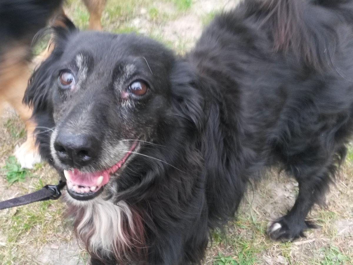 schwarzer-hund-ivel-an-leine Rest-des-Lebens-Patenschaft