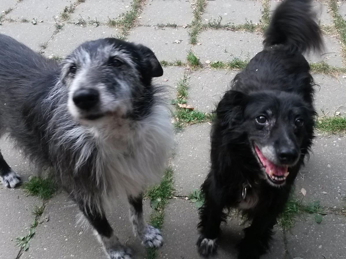 zwei-hunde-vom-bürorudel Rest-des-Lebens-Patenschaft