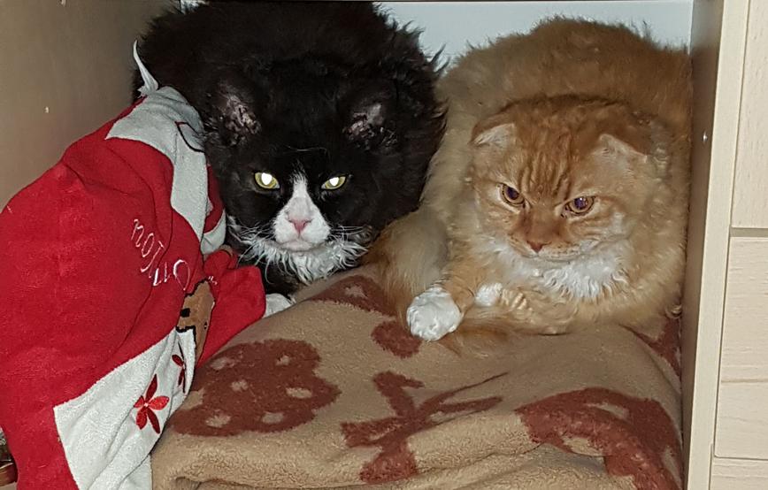zwei katzen liegen im schrank auf einer decke