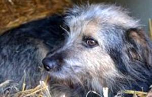 Aufnahmepatenschaft-hund-Belu-im-heu-300x191 Diese Fellnasen konnten wir zu uns ins Dorf holen