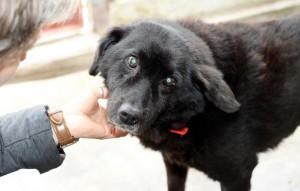 Aufnahmepatenschaft-schwarzer-hund-Lesio-wird-gekrault-300x191 Diese Fellnasen konnten wir zu uns ins Dorf holen