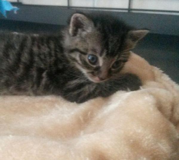 Baby2m 4 Katzenbabys vor befreundetem Tierheim ausgesetzt