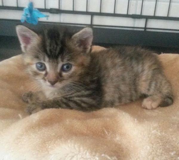 Baby3w 4 Katzenbabys vor befreundetem Tierheim ausgesetzt