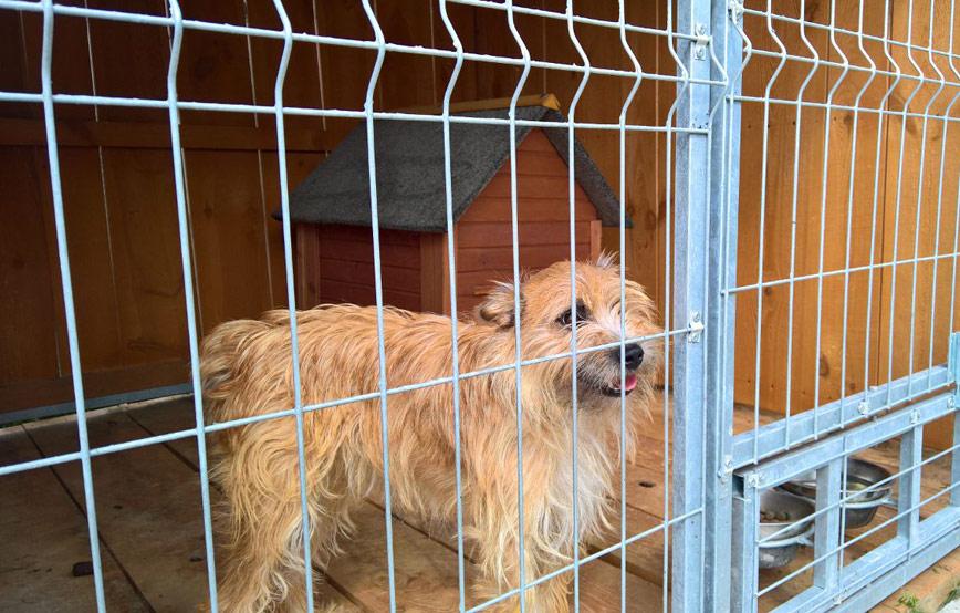 Hund-Tapsi-im-zwinger Diese Fellnasen konnten wir zu uns ins Dorf holen