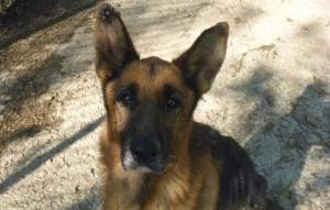 Hund-Tyron-will-zu-ins-in-dorf-reisen-300x191 Sieben Hunde suchten dringend Aufnahmepaten - Jetzt können Sie ins Tierschutzliga-Dorf