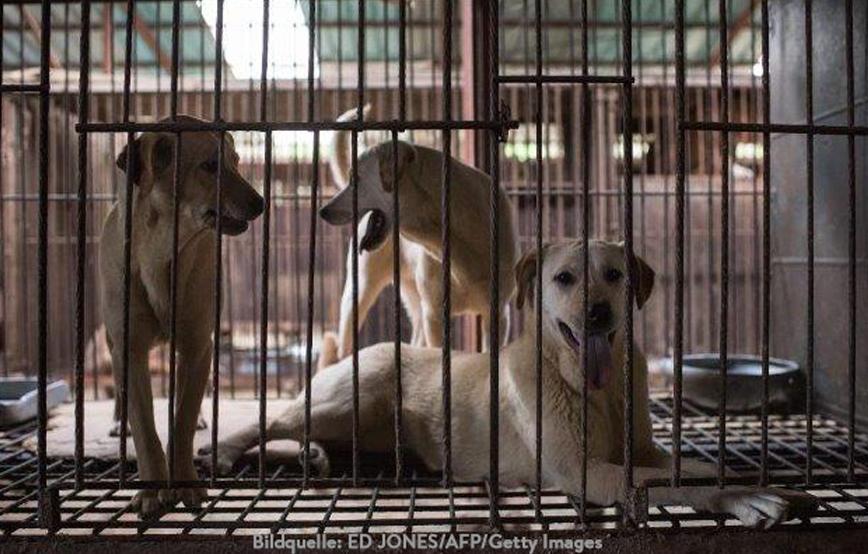 beitragsbild-china-hunde-essen-käfig Startseite