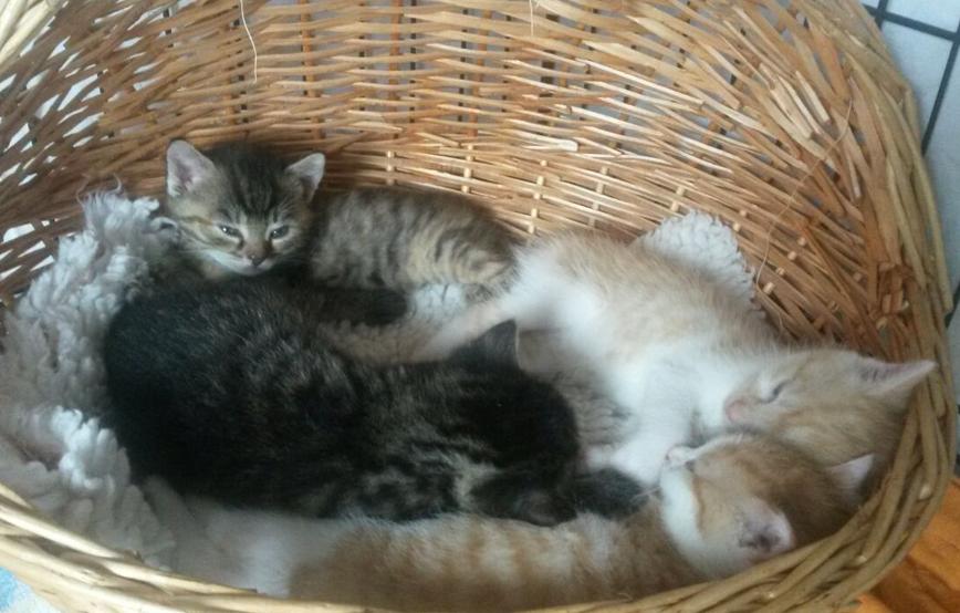 beitragsbild-katzen-babys-karton-ausgesetzt Unterstützen Sie das Tierheim Unterheinsdorf
