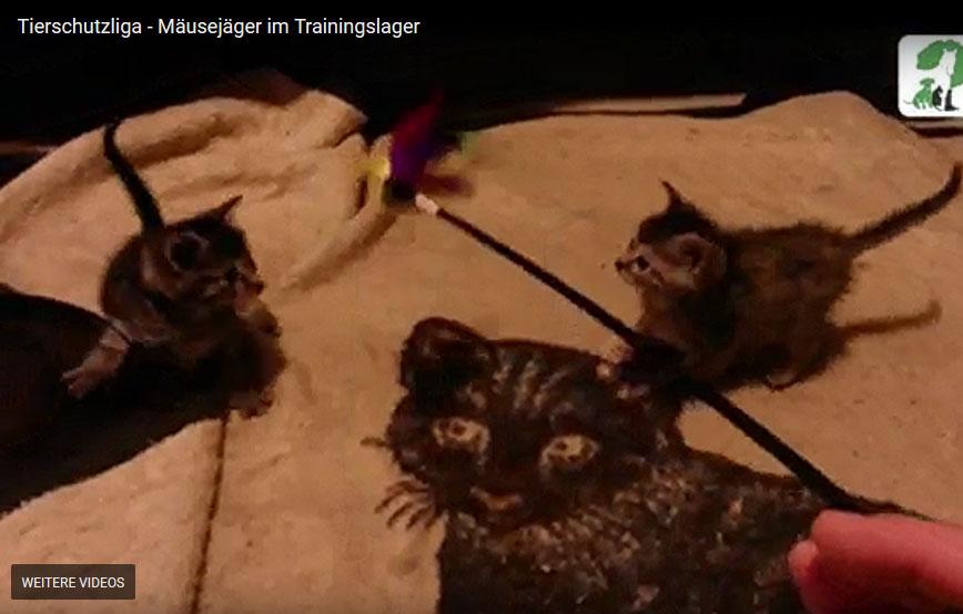beitragsbild-katzenbabys-mäusejäger-trainingslager Bei uns im Kindergarten