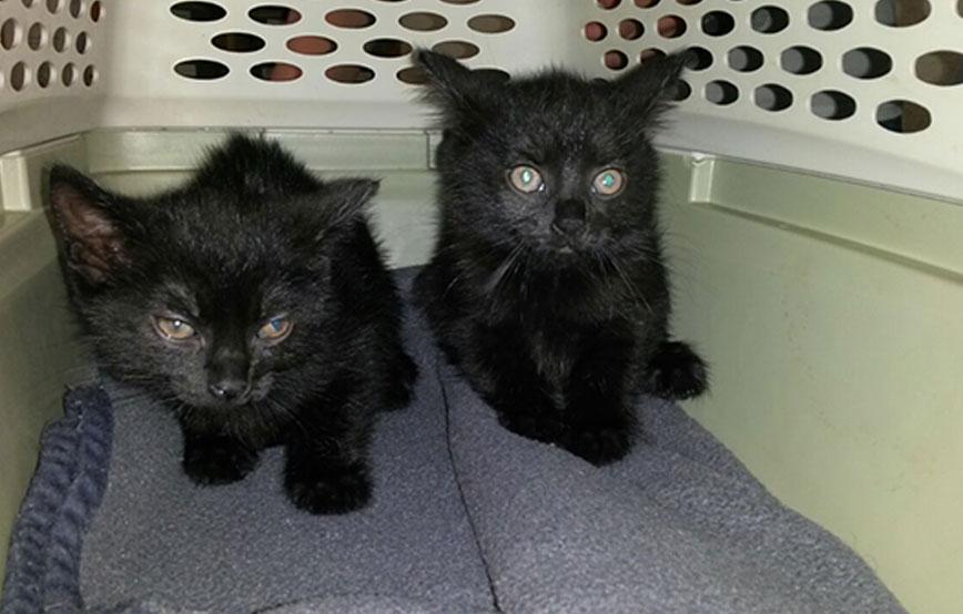 beitragsbild-katzenbabys-spielzeug-abgeschoben Zwei Katzenbabys als Spielzeug für die Kinder besorgt