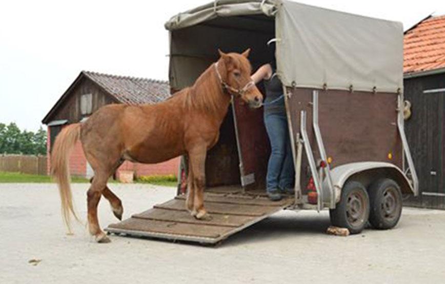 beitragsbild-pferdetransporter Tierschutzhof Wardenburg