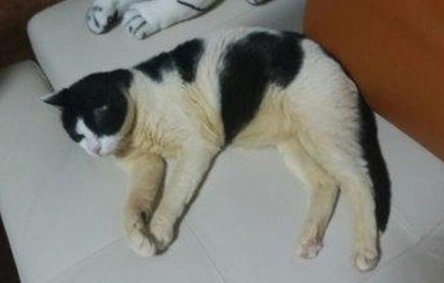 beitragsbild-update-rudi-kater-zuhause-tiger Unterstützen Sie das Tierschutzliga-Dorf