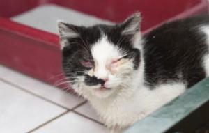 kranke-katze1-300x191 Katzenelend - Wir brauchen Hilfe