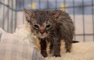 kranke-katze2-300x191 Katzenelend - Wir brauchen Hilfe