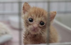 kranke-katze3-300x191 Katzenelend - Wir brauchen Hilfe